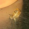 Photos: 非常に小さなカタツムリ - 8