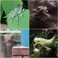 最近近所で見かけた珍しい生き物・奇妙な生き物 その2