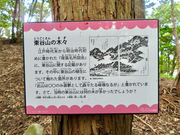 東谷山の木々に関するクイズ - 1