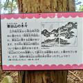 Photos: 東谷山の木々に関するクイズ - 1