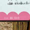 Photos: 東谷山の木々に関するクイズ - 2:答え