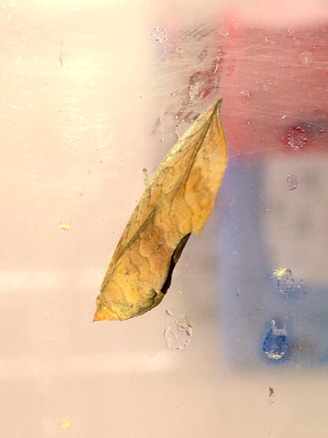 コンビニのガラスドアにいたアカエグリバ - 3