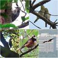 弥勒山で出会った鳥 - 4