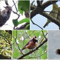 弥勒山で出会った鳥 - 1