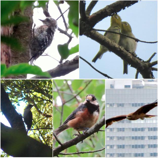 弥勒山で出会った鳥 - 5