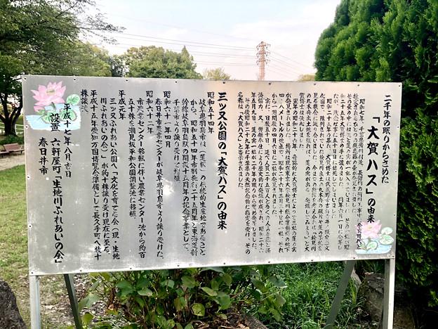 三ツ又ふれあい公園の大賀ハス - 5:説明