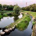 三ツ又ふれあい公園の蓮池と生地川