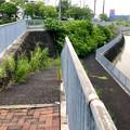 平池緑地 - 4:平池南公園(池沿いに降りられる道)