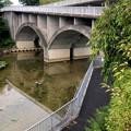 平池緑地 - 5:池沿いの道と特徴的な歩道橋