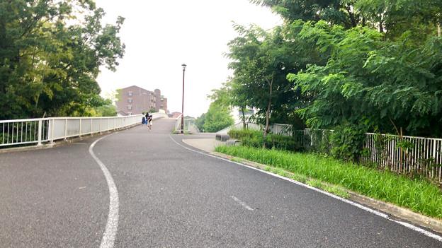 平池緑地 - 13:平池中央公園
