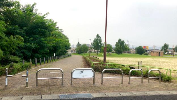 平池緑地 - 14:平池中央公園