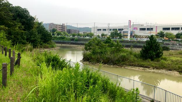 平池緑地 - 16:池