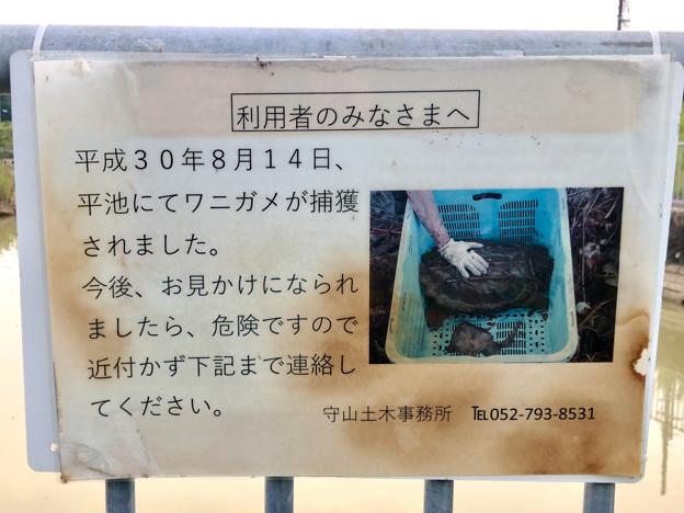 平池緑地 - 17:ワニガメ注意の張り紙
