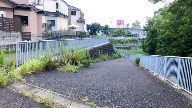 平池緑地 - 21:池沿いに降りる道