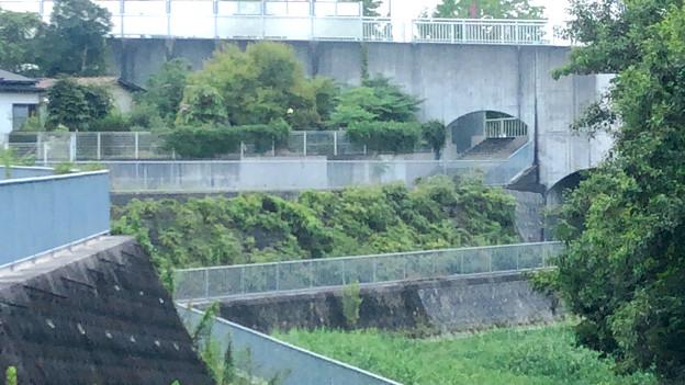 平池緑地 - 22:池沿いの道と特徴的な歩道橋