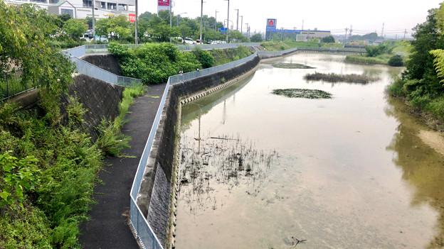 平池緑地 - 11:池と池沿いの道