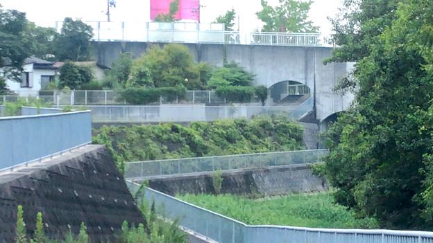 平池緑地 - 23:池沿いの道と特徴的な歩道橋