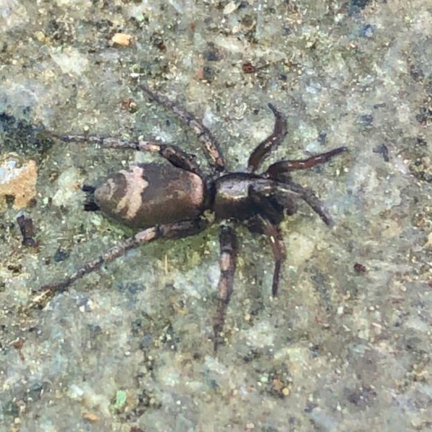 足元にいた小さな蜘蛛 - 1