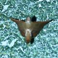 Photos: 奇妙な姿勢で壁に掴まっていた小さい蛾 - 3