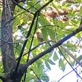 Photos: 木の上にいたソウシチョウ - 3
