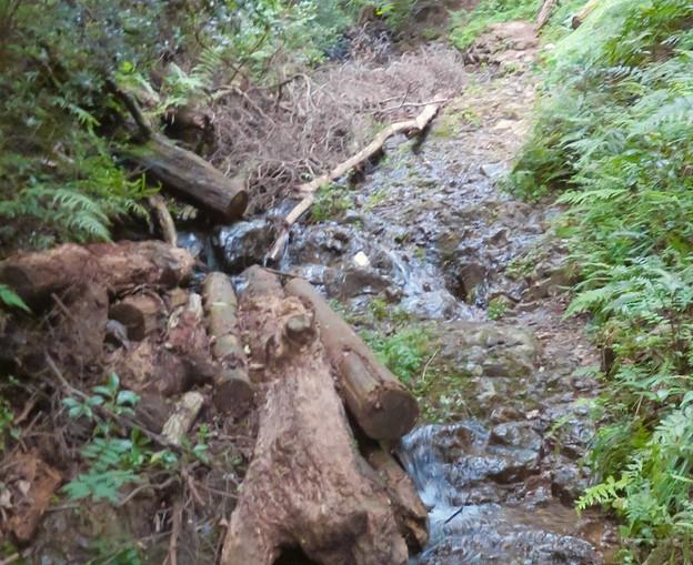 道樹山:柿ノ木川沿いの登山道(柿ノ木川を上るルートの石の白い目印)