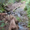 Photos: 道樹山:柿ノ木川沿いの登山道(柿ノ木川を上るルートの石の白い目印)