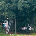 Photos: 大谷川沿いにあるツリーハウス? - 2
