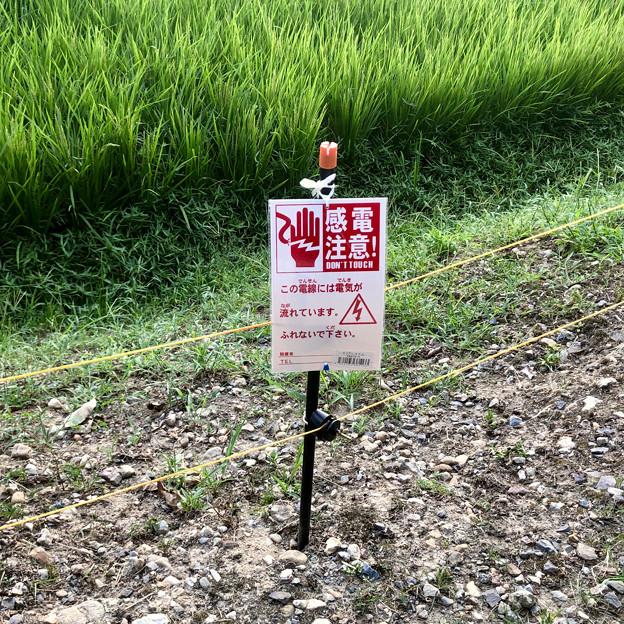 岩船神社前の田んぼの周囲にイノシシ避け?の電線