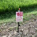 Photos: 岩船神社前の田んぼの周囲にイノシシ避け?の電線