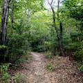 Photos: 西高森山の登山道 - 1:「1」番登山口から「2」番分かれ道までの1本道
