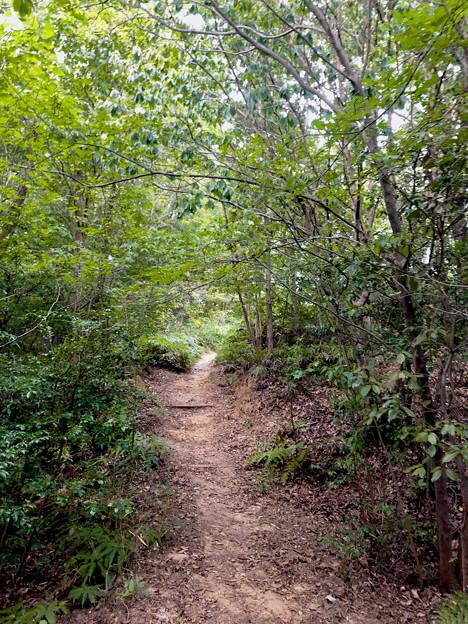 西高森山の登山道 - 2:「1」番登山口から「2」番分かれ道までの1本道