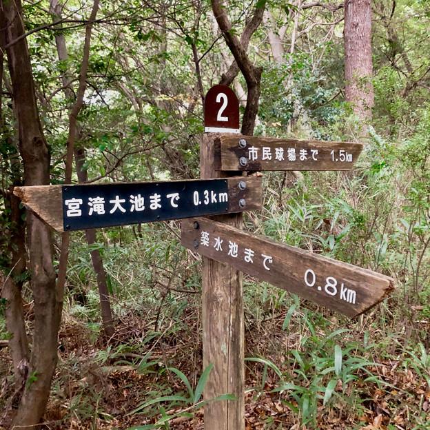 西高森山の登山道 - 4:「2」番の分かれ道(矢印案内板)