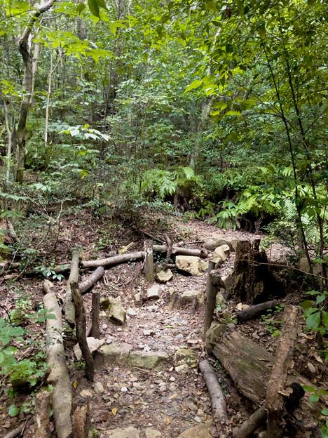 西高森山の登山道 - 8:「2」番の分かれ道から山頂への道(ちょっとした階段)