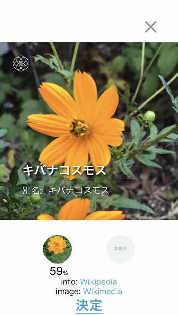 Photos: iOSの花判別アプリ「ハナノナ」 - 1:判定結果