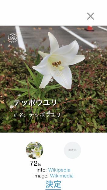 Photos: iOSの花判別アプリ「ハナノナ」 - 2:判定結果