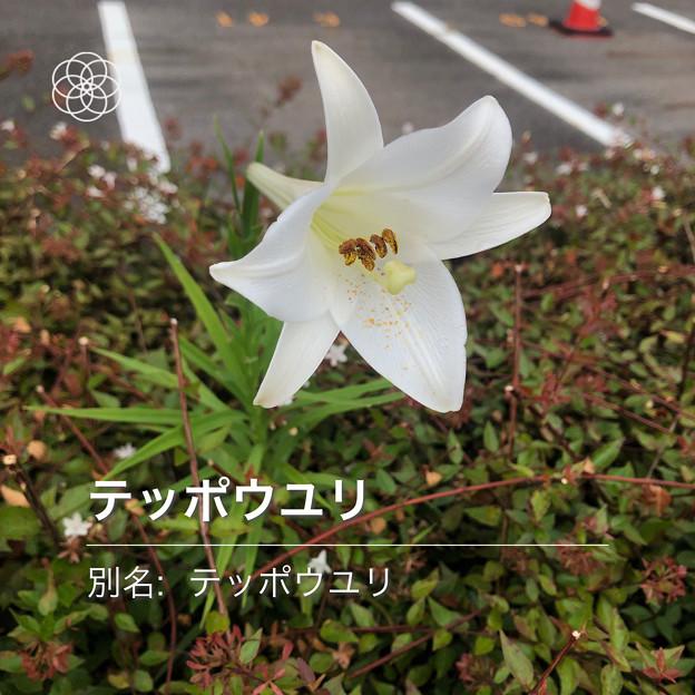 iOSの花判別アプリ「ハナノナ」 - 3
