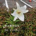 Photos: iOSの花判別アプリ「ハナノナ」 - 3