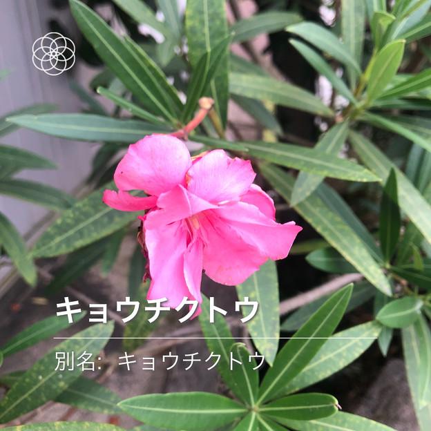 Photos: iOSの花判別アプリ「ハナノナ」 - 5
