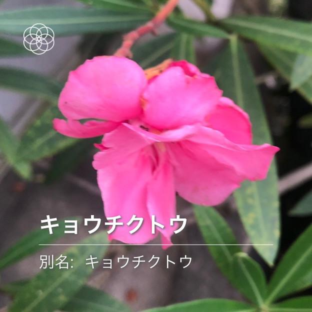 iOSの花判別アプリ「ハナノナ」 - 6