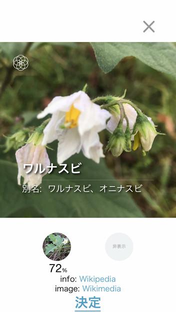 Photos: iOSの花判別アプリ「ハナノナ」 - 7