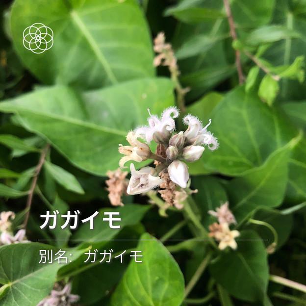 iOSの花判別アプリ「ハナノナ」 - 9