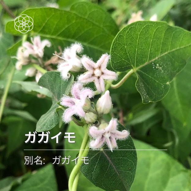 Photos: iOSの花判別アプリ「ハナノナ」 - 10