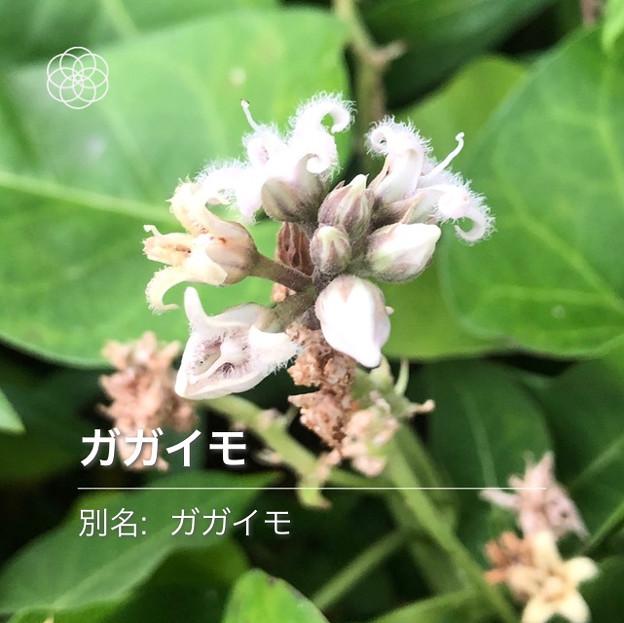 Photos: iOSの花判別アプリ「ハナノナ」 - 11