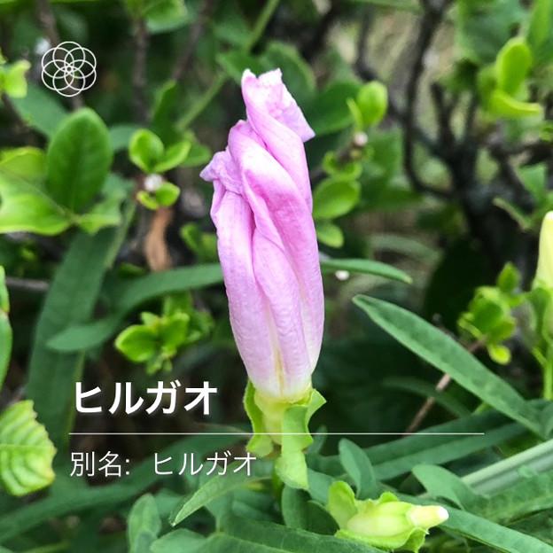 iOSの花判別アプリ「ハナノナ」 - 12