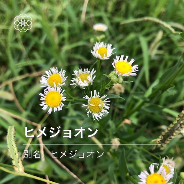 Photos: iOSの花判別アプリ「ハナノナ」 - 14