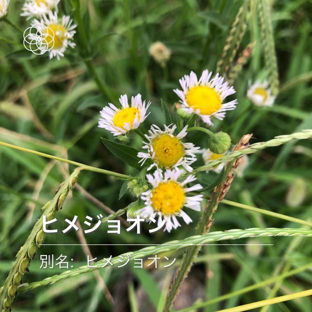Photos: iOSの花判別アプリ「ハナノナ」 - 15