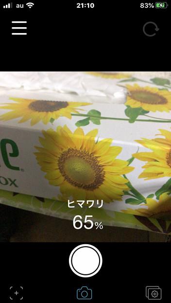 iOSの花判別アプリ「ハナノナ」 - 17:カメラモード