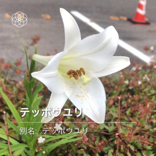 Photos: iOSの花判別アプリ「ハナノナ」 - 4