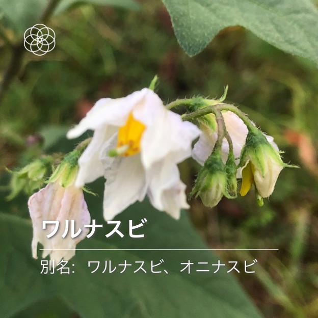 iOSの花判別アプリ「ハナノナ」 - 8