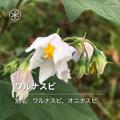 Photos: iOSの花判別アプリ「ハナノナ」 - 8